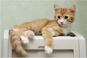 laser printer cleaning dallas - because your cat likes to lay on your printer